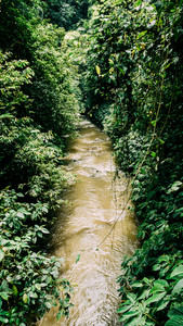 Small river in Rainforest Jungle, Ubud, Bali, Indonesia