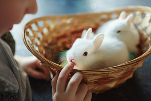 Small white bunny looking at little kid during play