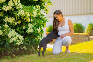 Smiling pregnant woman with a big belly plays with her dog in the garden
