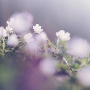 soft beautiful flowers