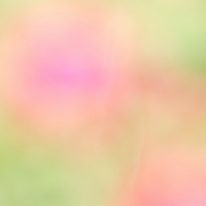 Spring. Abstract nature flowers colorful background. Blur