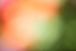 Spring and flowers. Abstract nature flowers colorful background. Blur