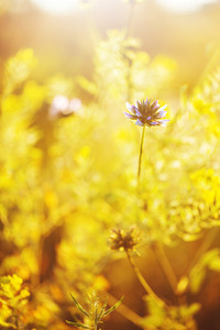 spring beautiful wild meadow flowers in field. Nature sunny ourdoor photo with fresh bright morning sunlight and warm colors