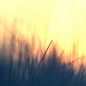 Spring. Flower grass plant on summer morning sunrise. Nature