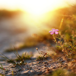 Spring. Flower in field. Nature outdoor