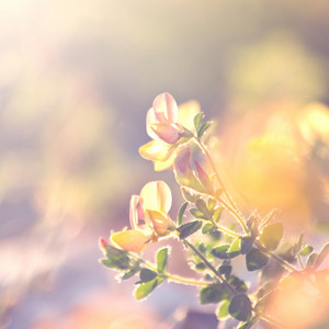 Spring. Flowers in morning sunshine. Nature macro