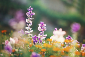 Spring. Flowers in nature. Outdoor fresh photo