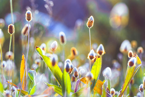 Spring flowers. Nature background in field in fresh morning