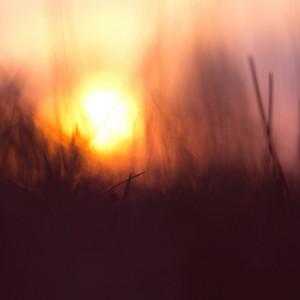 Spring grass. Vintage sunrise background