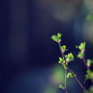 Spring. Green leaves on dark nature background