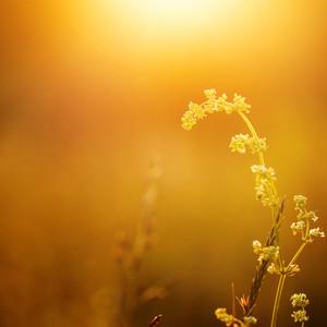 Spring meadow flower in sunny field