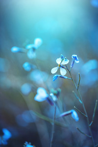 spring nature flower on blue background. Outdoor mystery vintage photo of beautiful wild meadow plant