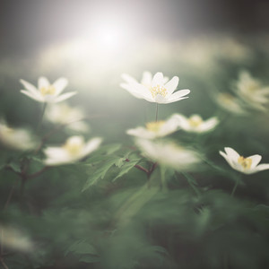 Spring nature. Flowers outdoor background