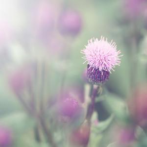 Spring. Nature meadow flowers in field