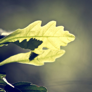 Spring. Nature outdoor green leaves background
