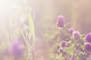 Spring. Romantic soft meadow flowers in grass in field in fresh morning