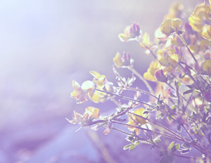 Spring soft vintage meadow beautiful flowers. Nature