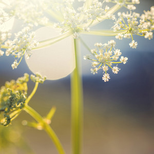 Spting big meadow flower on light nature background