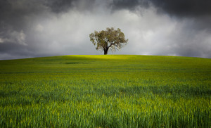 Storm clouds surround a lone tree