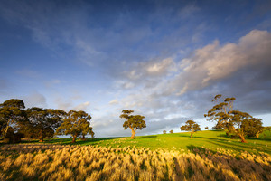 Stunning Afternoon light in the Clare Valley