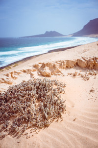 Stunning desolate landscape of sand dunes and desert plants in front of ocean waves on Baia Das Gatas in background. North of Calhau, Sao Vicente Island Cape Verde