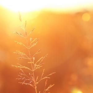 Sunny field. Nature