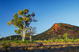 Sunrise near Alice Springs, Australia
