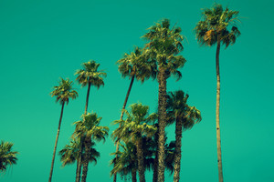 Tall palm trees against sky, green toned