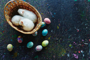 Three small dwarf rabbits in basket and group of painted Easter eggs near by