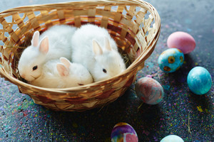 Three white rabbits in basket and creative painted eggs