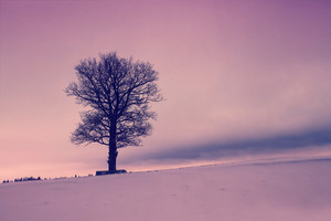 Tree on the snowy field at sunrise