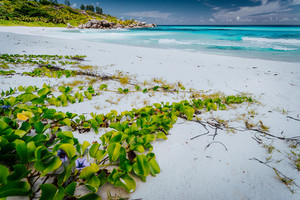 Tropical Paradise Beach Grand Anse, La Digue, Seychelels