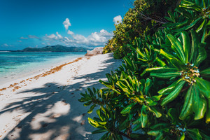 Tropical plants at famous Anse Source d'Argent beach on island La Digue in Seychelles. Exotic paradise travel scenery concept shot