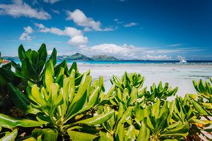 Tropical plants at famous Anse Source d'Argent beach on island La Digue in Seychelles. Praslin Island in Background. Exotic paradise travel scenery concept shot