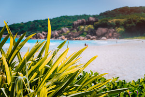 Tropical vegetation with defocused blurred Grand Anse beach in La Digue, Seychelles with its famous granite rock formations. Natural warm light