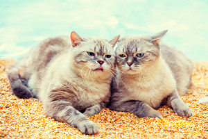 Two cats relaxing on the beach