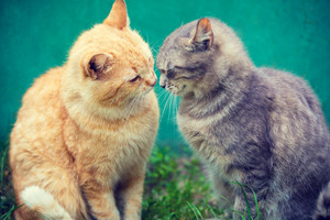 Two cats sniffing to each other outdoor