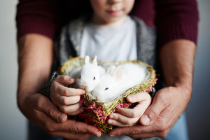 Two cute rabbits in heart-shaped basket held by boy and his father