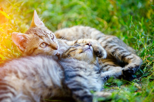 Two kittens lying on the grass