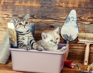 Two little kittens sitting together in washbowl with tools for repair