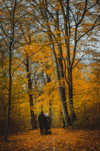 Unrecognizable couple with buggy on pathway. Trees covered with golden leaves in the autumn forest