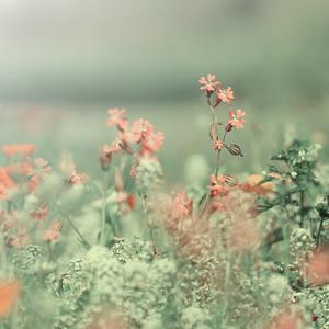 unusual vintage retro pink meadow flowers