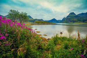 View of the fjord. Rocky seashore with reflection, blue cloudy sky, and blossoming pink flowers. Beautiful nature Norway.