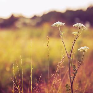 vintage autumn field background