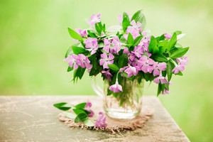 Vintage bouquet of periwinkle flowers outdoor on grunge wooden table against green blurred natural background