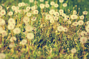 Vintage floral spring background
