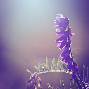 Vintage flower in field. Nature