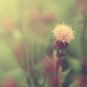 vintage flower. Nature vintage view