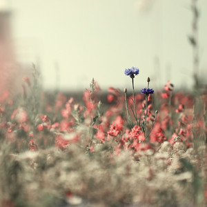 vintage flowers in field with unusual colors. Nature