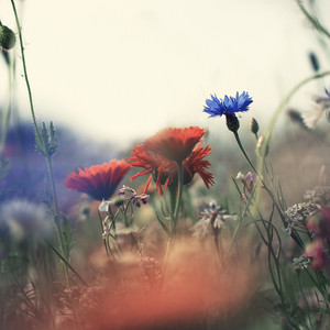 vintage flowers nature background